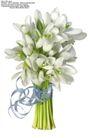 百合花0017,百合花,鲜花,