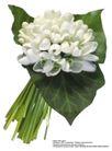 百合花0022,百合花,鲜花,