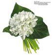 百合花0023,百合花,鲜花,