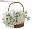 百合花0031,百合花,鲜花,花篮 百合花 白色