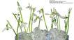 百合花0037,百合花,鲜花,白色 水晶 花卉