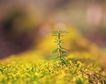 绿芽新生0048,绿芽新生,鲜花,小草 发芽 绿叶