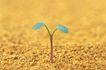 绿芽新生0054,绿芽新生,鲜花,