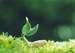 绿芽新生0062,绿芽新生,鲜花,