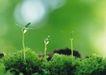 绿芽新生0072,绿芽新生,鲜花,草地 发芽 新生