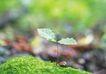 绿芽新生0075,绿芽新生,鲜花,叶片 草皮 自然