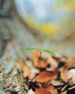 绿芽新生0085,绿芽新生,鲜花,出土的苗儿