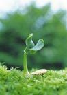 绿芽新生0086,绿芽新生,鲜花,绿芽新生