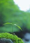 绿芽新生0088,绿芽新生,鲜花,鲜绿生命