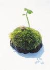 绿芽新生0089,绿芽新生,鲜花,破土而出