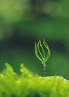 绿芽新生0090,绿芽新生,鲜花,春季发芽