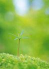 绿芽新生0091,绿芽新生,鲜花,嫩叶 新生物 嫩绿色