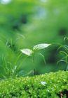 绿芽新生0094,绿芽新生,鲜花,自然 小草 景观