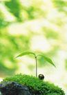 绿芽新生0096,绿芽新生,鲜花,叶子 生长 叶茎