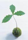 绿芽新生0097,绿芽新生,鲜花,绿叶 嫩牙 球形
