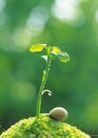 绿芽新生0098,绿芽新生,鲜花,发芽 青草 新生物
