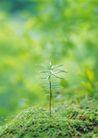 绿芽新生0099,绿芽新生,鲜花,小草 自然 绿意