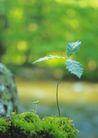 绿芽新生0100,绿芽新生,鲜花,绿色 枝叶 叶片