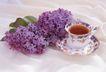 茶与咖啡0034,茶与咖啡,水果食品,小花朵 叶子 紫色花