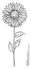 食品包装示图0094,食品包装示图,水果食品,花朵 向日葵 黑白图