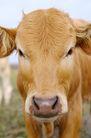 动物表情农场0020,动物表情农场,农业,