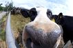 动物表情农场0021,动物表情农场,农业,