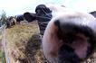 动物表情农场0023,动物表情农场,农业,