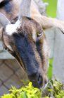 动物表情农场0024,动物表情农场,农业,