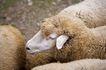 动物表情农场0031,动物表情农场,农业,