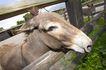 动物表情农场0032,动物表情农场,农业,