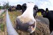 动物表情农场0033,动物表情农场,农业,