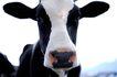 动物表情农场0035,动物表情农场,农业,