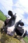 动物表情农场0042,动物表情农场,农业,