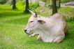 动物表情农场0050,动物表情农场,农业,
