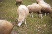 动物表情农场0053,动物表情农场,农业,