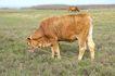 动物表情农场0054,动物表情农场,农业,