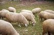 动物表情农场0055,动物表情农场,农业,