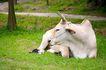 动物表情农场0057,动物表情农场,农业,