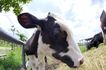 动物表情农场0058,动物表情农场,农业,
