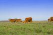 动物表情农场0066,动物表情农场,农业,