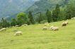 动物表情农场0068,动物表情农场,农业,