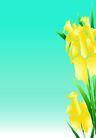 花卉0009,花卉,底纹背景,