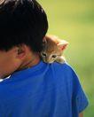 儿童宠物0047,儿童宠物,儿童,小小的猫儿