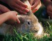 儿童宠物0058,儿童宠物,儿童,青草 孩子的手 小兔子