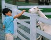 儿童宠物0080,儿童宠物,儿童,喂羊