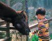 儿童宠物0083,儿童宠物,儿童,马头