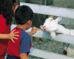 儿童宠物0085,儿童宠物,儿童,羊头