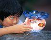 儿童宠物0100,儿童宠物,儿童,鱼缸 金鱼 观看