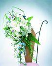 花艺摆设0437,花艺摆设,植物,