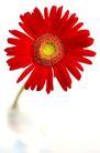 向日葵0025,向日葵,植物,